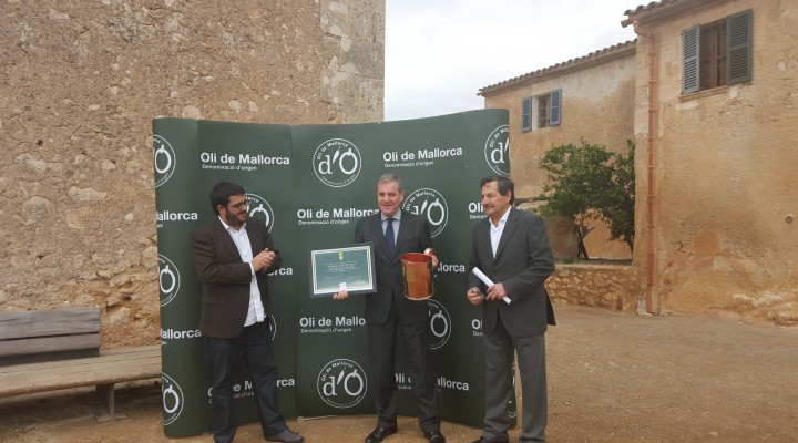 Tafoner Major Oli de Mallorca 2015-2016