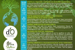 Visita a olivares y talleres culinarios, algunas de las actividades para celebrar el Dia Mundial del Olivo
